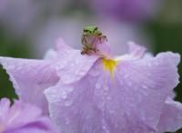 東海地方の梅雨入り、梅雨明け時期予想2013