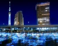 東京ホタル回収方法