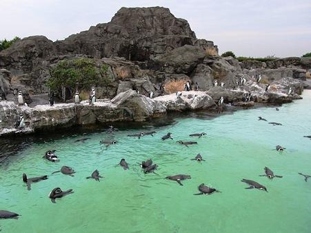 葛西臨海水族園【ペンギンの生態】